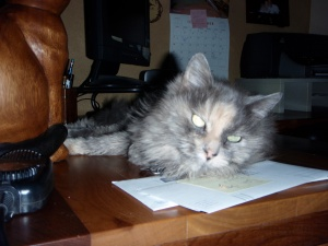 Rocki lounging on the desk