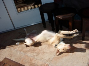 Lolita sunning